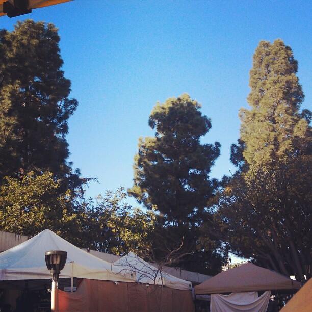 Blue skies for our LA winter! #la #losangeles #blue #sky