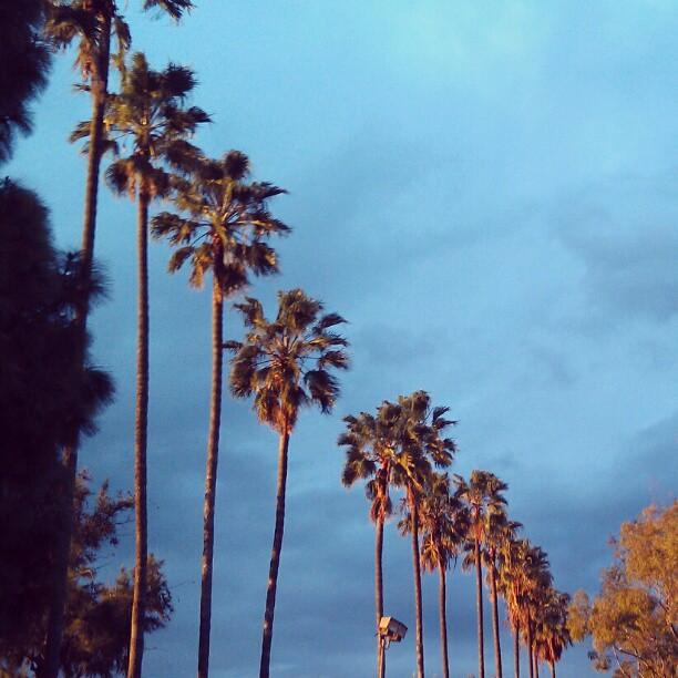 Thank you for another beautiful #SundayFunday !!! #Melrosetradingpost #LA