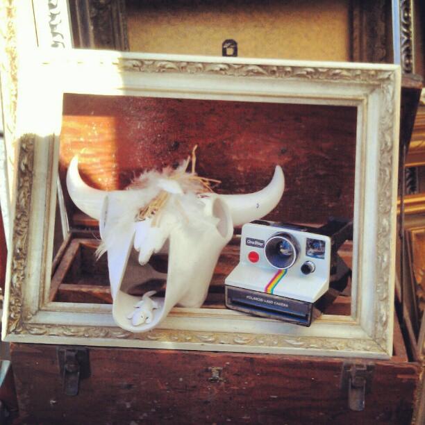 Y27 has got the best old cameras and sweet frames! #Melrosetradingpost #fleamarket #camera #skull #frame #decor #home