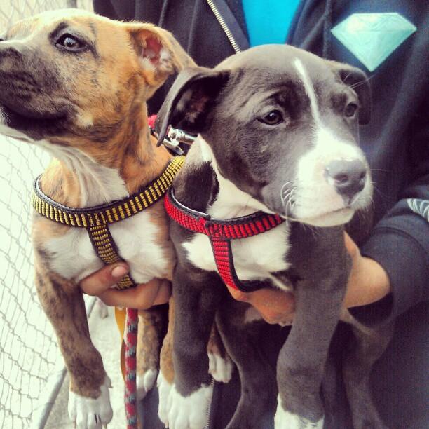 DOUBLE CUTIE PIE ALERT!!! #puppy #puppyparty #Melrosetradingpost #fleamarket