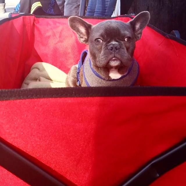 Cutest puppy of the day? We think so! #MTPfairfax #PuppyLove