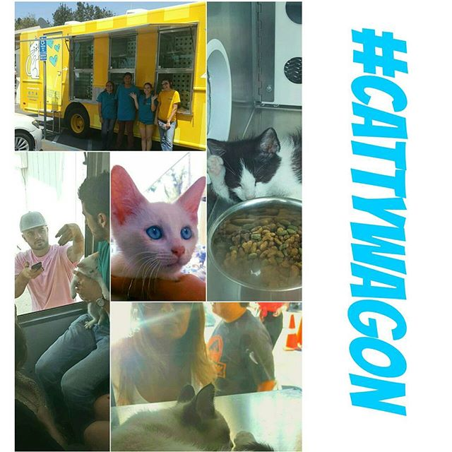 The #CattyWagon is everything we imagined and more.  Adopt your next best friend with @adoptnshop today! #MTPfairfax