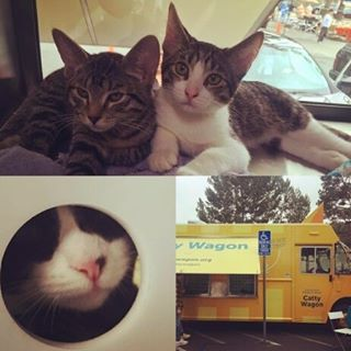 Get ready folks! The sun will be shining this #SundayFunday with a forecast of 71 degrees!  It's the perfect opportunity to visit the kittens on the @adoptnshop #CattyWagon.They'll be parked by the Fairfax and Clinton Street entrance of the market.Thank you to @Aquajustaqua for this adorable photo from last month's CattyWagon visit. #MelroseTradingPost #MTPfairfax #CatsofMTP #melrose #Fairfax #Fleamarket #Sundayinla #lawinter#kittens #cats