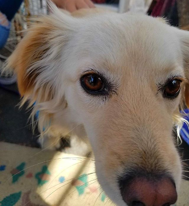 Our intern Karla found today's Cutie Pie of the Day, Mia! Thank you @ileeneeee for bringing your sweet pup!#DogsofMTP #melrosetradingpost #mtpfairfax #melrose #Fairfax #fleamarket #losangeles #california #sundayinla #shoplocalla #SundayFunday #dogfriendly #puppylove #doggie #perrito