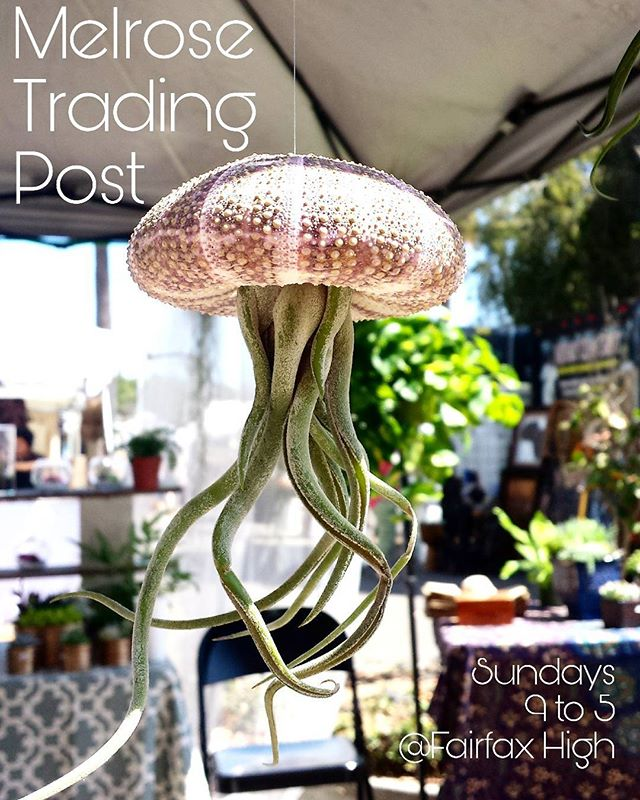 The forecast is clearing the way for a beautiful #Sundayfunday.See you Sunday!#MelroseTradingPost#LosAngeles#California #SundayInLAPhoto taken inside of the @coyote_creative booth