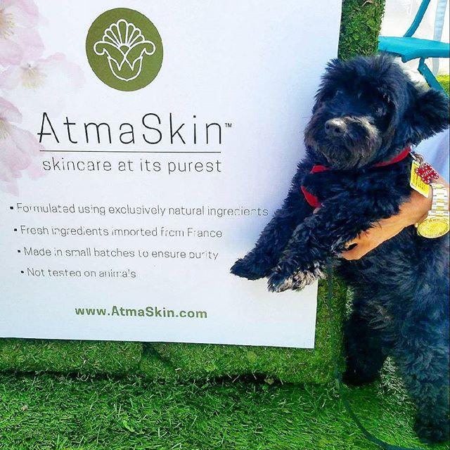 Karla's pick for Cutie Pie of the Day is  Coco in the @atmaskin booth!  #DogsofMTP#Melrosetradingpost #Mtpfairfax #melrose #fairfax #fleamarket #losangeles #california #Sundayfunday #shoplocalla