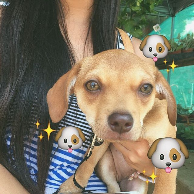 Karla's Cutie Pie of the week is the Chiweenie, Lady! Such a lovey! #melrosetradingpost #mtpfairfax #dogsofmtp #sundayinla #sundayscenes #sundayfunday