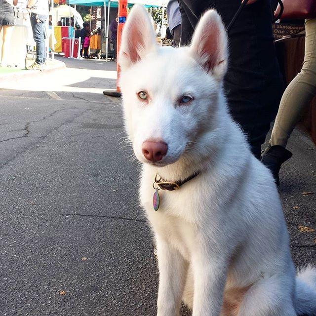 #dogsofmtp #cutiepieoftheday #melrosetradingpost #mtpfairfax #fleamarket #losangeles #california #Sundayfunday