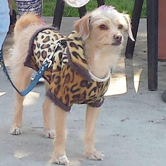 #dogsofmtp #cutiepieoftheday #melrosetradingpost #mtpfairfax #fleamarket #sundayfunday #losangeles #California #fairfaxhigh #fairfaxhs