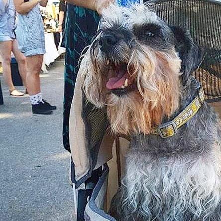 Awee this cutie #cutiepieoftheday #melrosetradingpost #dogsofmtp #Mtpfairfax #losangeles #California #sundayfunday #fleamarket