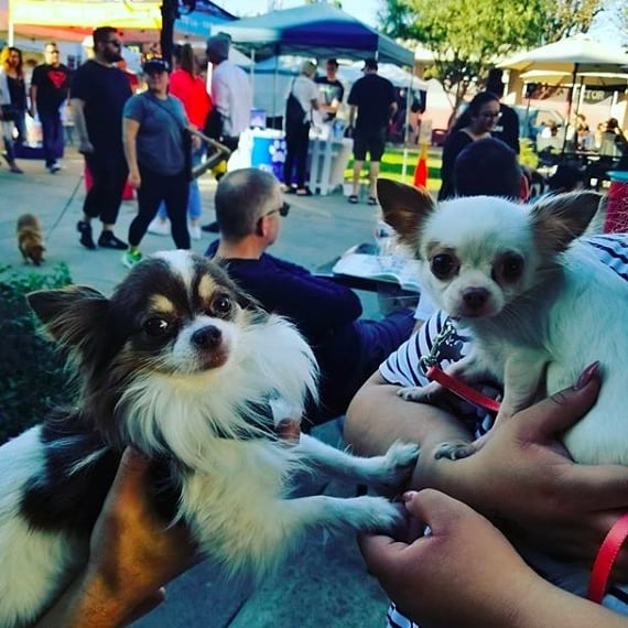 We've featured this adorable photo by @worldtraveler365 on this month's $1 off coupon. Visit MelroseTradingPost.org to sign up for our monthly e-newsletter by Thursday to get this month's email with the coupon. ...#MelroseTradingPost #DogsofMTP #sundayfunday #sundayinla #greenwayarts #melrose #fairfax #fleamarket #losangeles