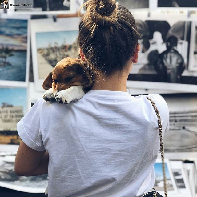 Cute shot!! @therealmilodog #dogsofmtp#cutiepieoftheday #melrosetradingpost #mtpfairfax #fleamarket #sundayfunday #losangeles #California #fairfaxhigh #fairfaxhs ... Went to the @melrosetradingpost and took a nap at the same time. This is what Sunday fun day means to me. 📸: @_melisoto