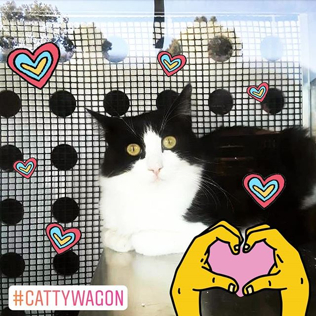 Adopt some kitties :3 #melrosetradingpost #cattywagon #losangeles #california #Sundayfunday #fleamarket #rainbow #cats #catsofla