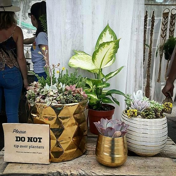 Want to freshen up your living space with beautiful plants? Want to wake up every morning with fresh air? Well in b110, they have really pretty plants so if you want it, come and get it! #melrosetradingpost #mtpfairfax #Melrose #fairfax #fleamarket #losangeles #california #Sundayfunday