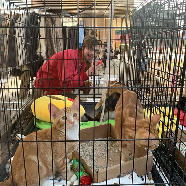 @snpla is here today in hopes of getting these adorable and sweet kittens new homes. Be sure to stop by #melrosetradingpost #melrose #kittens #cats #cute #kittenadoption